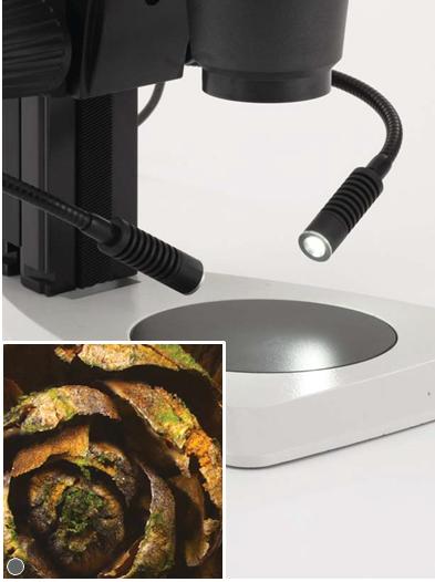 skachannye-fayly-1 Leica S4 E, S6 E, S6, S6 D и S8 APO стереомикроскопы